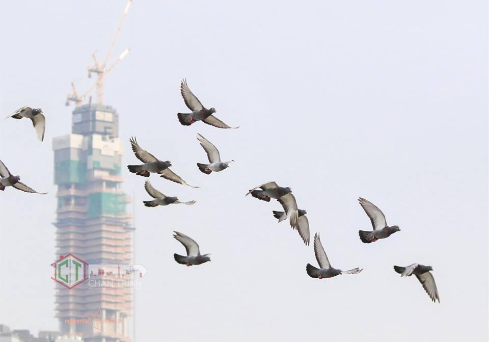 Cánh chim bay ngang Landmark 81 Vinhomes Central Park - Ảnh Tai Nguyen