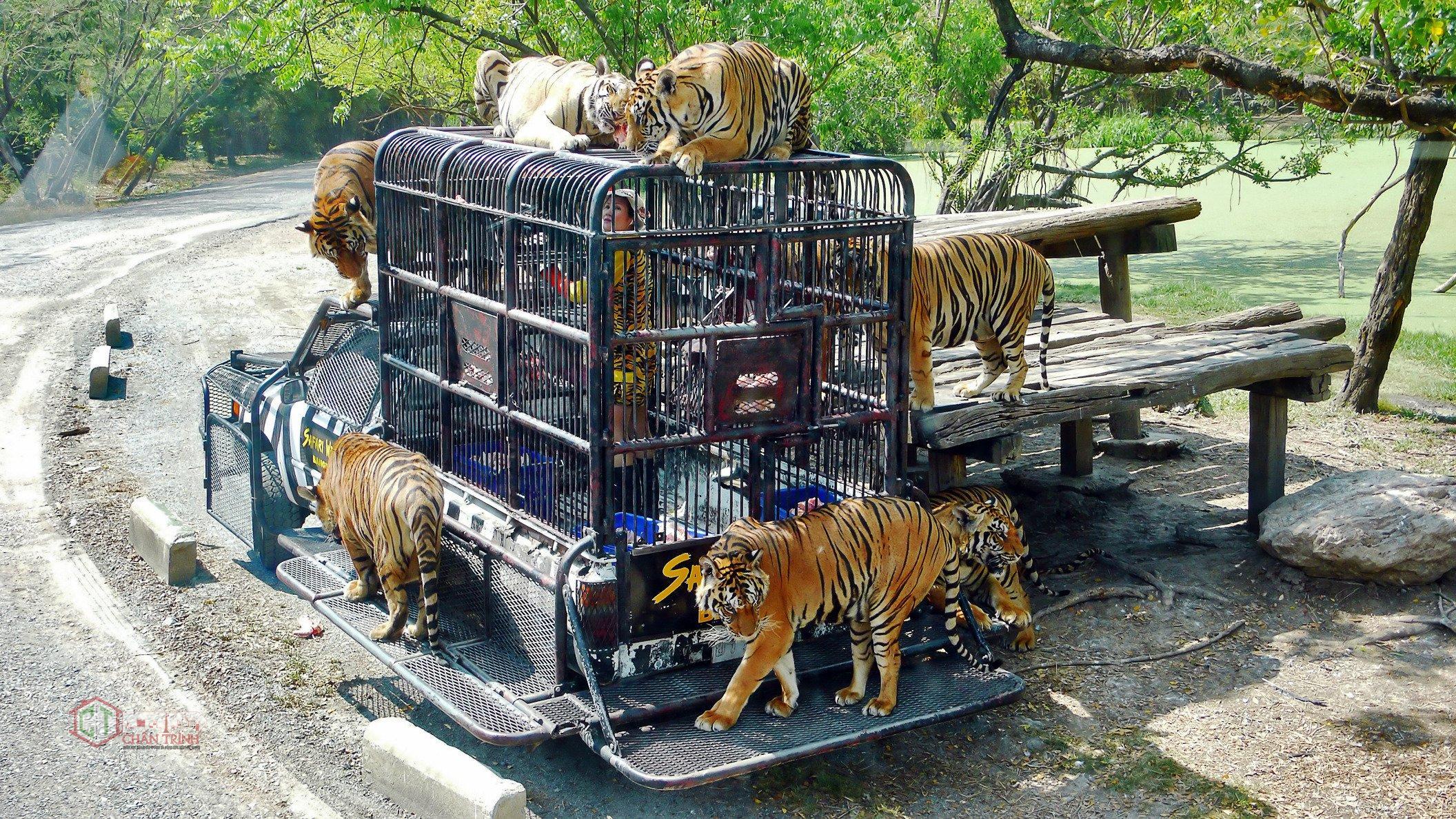 Vườn thú hoang dã - Hình minh họa