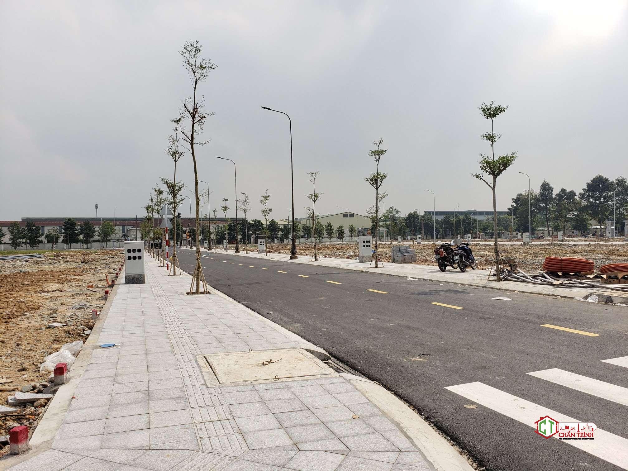 Cây xanh đã được trồng tại dự án.